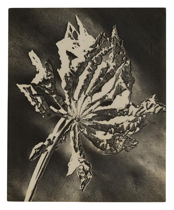 Gertrudes Altschul, Folha morta (Dead leaf), no date. Period of circulation: ca. 1952–59