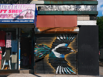 Member Preview of Audubon Mural Project: Photographs by Gail Albert Halaban